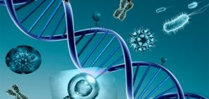 Biomarkers analysis and gene expression